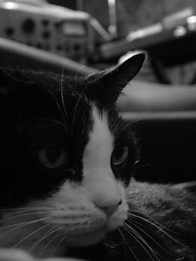 Tippi Cat
