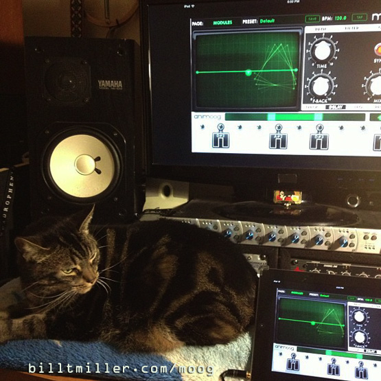 Ziggy Cat Luvs ANIMOOG