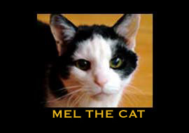 MEL THE CAT