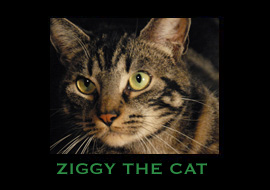 ZIGGY THE CAT