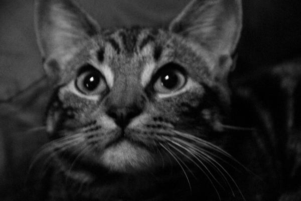 Ziggy The Cat